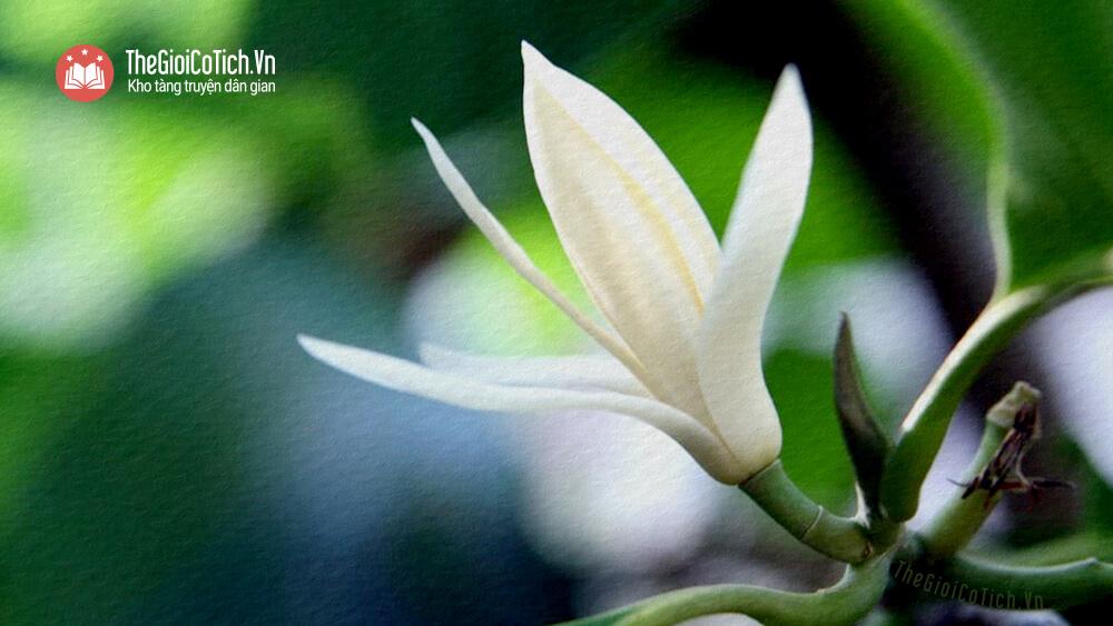 Câu chuyện Sự tích các loài hoa