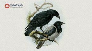 Chim Khách và Quạ